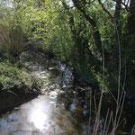 Zufluss zum Bruchraingraben (Foto: B. Budig)