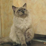 помыли котика, и не высушили :)