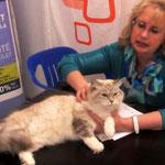 Всемирная выставка кошек 10-11.10.2015