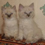 почти 2 мес (кошка слева)