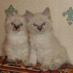 почти 2 мес (кот  справа)