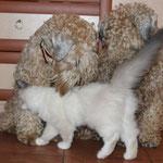 любимые собачки :)