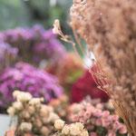 Trockenblumen Mainz