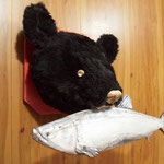 """A Bear Hunting trophy """"with a salmon""""  / 熊のハンティングトロフィー(鮭付き)"""