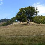 Weidfeld mit Blick auf Rabenfelsen