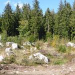 Eisenbreche Steinkreis (Reste) © Hartmut Hermanns
