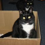 Lilli und Minka, die beiden Grazien vom Steinberg.