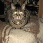 Loreena, die Unvergessene, die im Katzenhimmel ist.