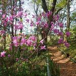 園の樹林はいろいろの花が見頃です。