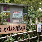 園の入り口でヤマユリがお出迎えです。