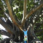 Riesig dieser Baum