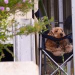 Hundstage in Australien