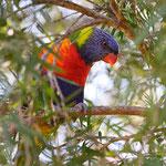 Die Farben Australiens werden uns fehlen!