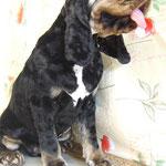 il cane è tutto rasato cortissimo e in un paio di mesi si ricomincia da capo!!!
