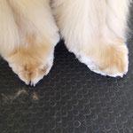 piedini da gatto
