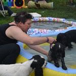 insegnamento dell'inserimento in acqua di un cane...