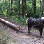 Stoneman 2016 bronze - Impressionen von der Strecke