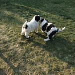 """Juno und Josse (unser kleines """"Zebra"""")"""