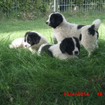 Kaya, Karis und Kolja unter dem Trampolin