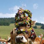 Kranzkuh beim Viehscheid, Almabtrieb im Allgäu