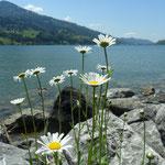 Am Großen Alpsee bei Immenstadt