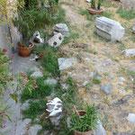 Torre Argentina遺跡の猫コロニー:4匹居ます。見つけられましたか?