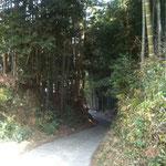 竹林がとても美しいです。