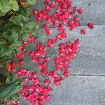Blütenteppich zur Begrüßung