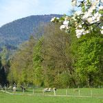 Pechlerhof am Auerbach, umgeben von Wiesen