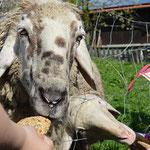 Bilder zu Bauernhoftiere