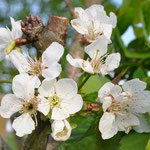 Frühling -  Foto Andrea Weinke, Gross Laasch Flexibel e.V.