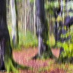 Im Wald bei Zingst