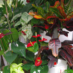 観葉植物コーナー(夏)