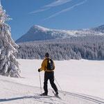 Ski de fond sur le plateau