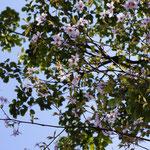 山桜が咲いていました^^