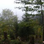 Jungwaldpflege und Aufforstung