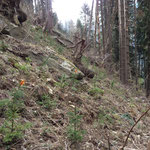 AuffoJungwaldpflege und Aufforstungrstung
