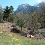 Waldrandpflege Buchhholz Silenen