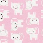 RK Urban Zoologie cats