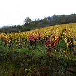 L'automne dans les vignes du Vallon