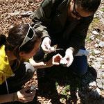 analyse de la roche avec de l'acide, pour comprendre la foramtion du massif karstique