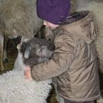 Les agneaux ne sont pas farouches !
