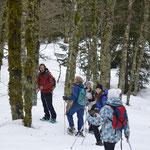 En descendant dans la forêt, à la recherche d'empreintes dans la neige