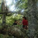 Grimpe d'arbre et installation dansl es hamac pour le conte suspendu