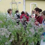 Un détour par le jardin patagé géré par Salies en transition a permis de cueillir un peu de marjolaine