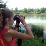 De jeunes observatuers s'exercentà l'identification d'oiseaux d'eau : garde-boeufs, garzettes, canards...