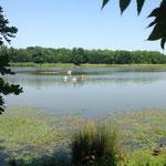 Le site de la saligue aux oiseaux, propice à l'observation, mais aussi à la détente dans la verdure