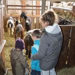 Les enfants intimidés devant les chèvres (ça ne dure pas longtemps!)
