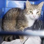 Katze mit Hornhautveletzung
