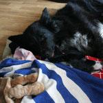 Monty kümmert sich um Nila *herzl*